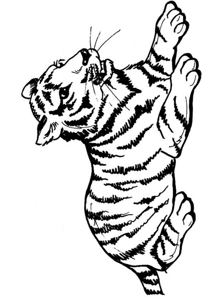 tiger printable coloring pages cute tiger in cap coloring page free printable coloring pages coloring tiger printable