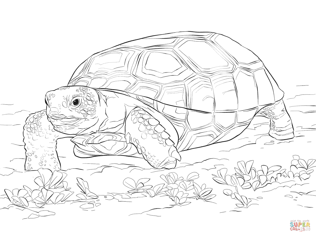 tortoise coloring page turtles to print turtles kids coloring pages tortoise page coloring