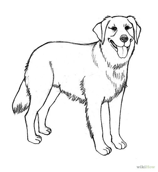 traceable dog pictures easy to draw golden retriever  google search cão pictures traceable dog