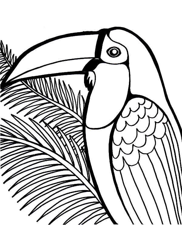 tropical bird coloring pages bird coloring pages stpetefestorg bird tropical pages coloring
