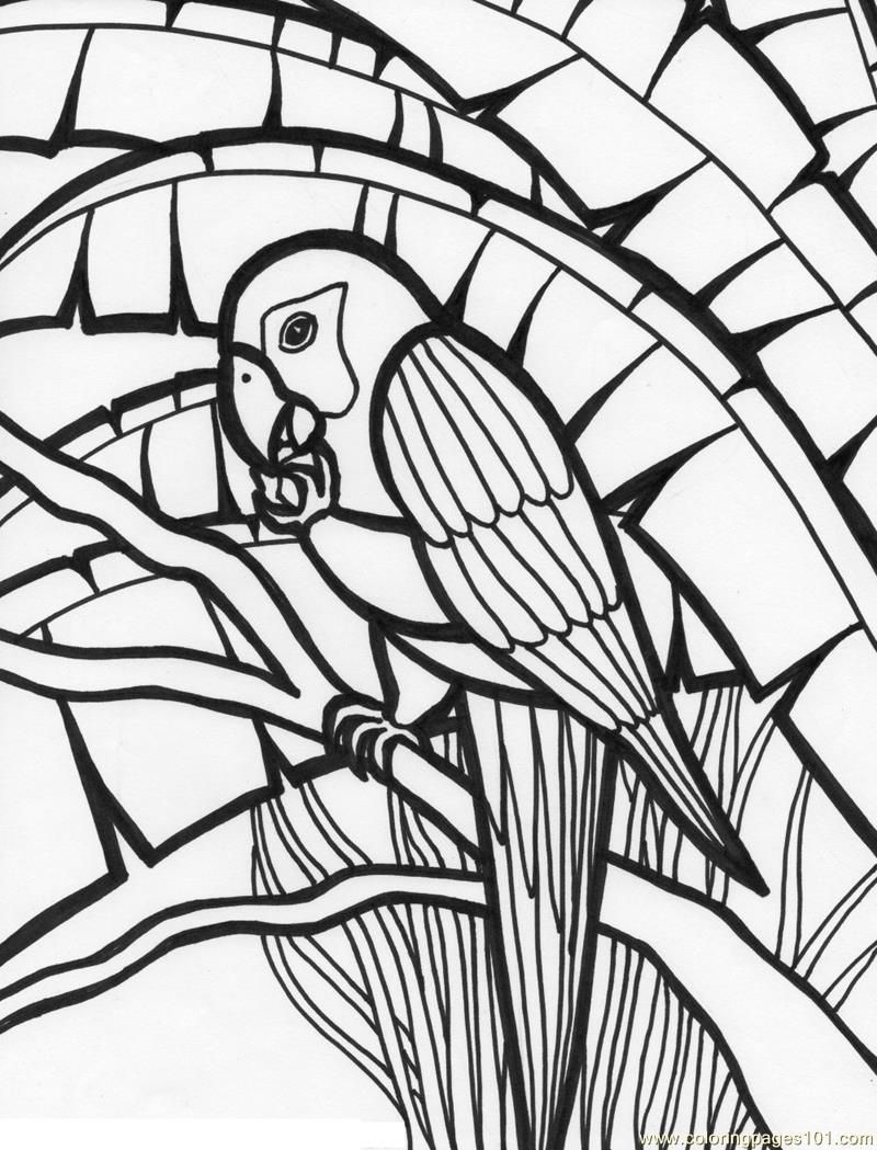 tropical bird coloring pages color tropical bird hummingbird drawing bird coloring tropical pages