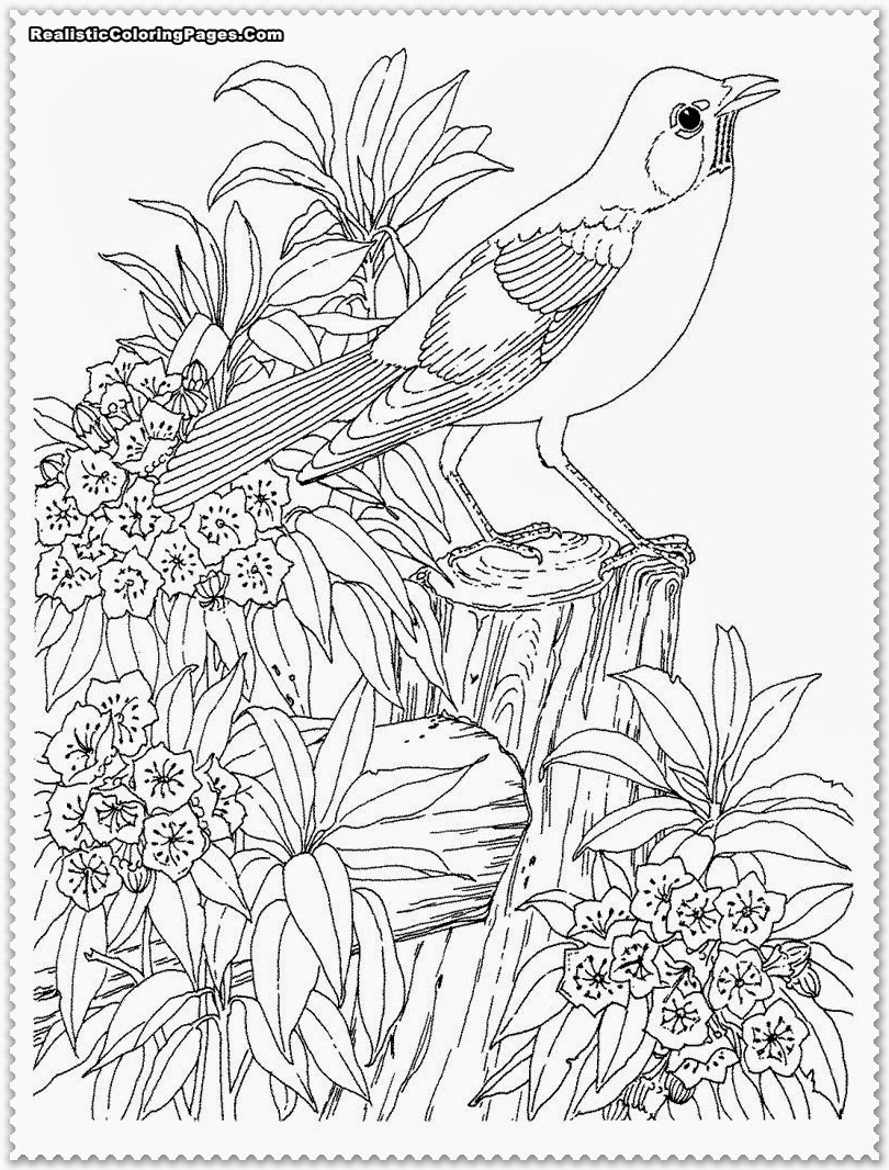 tropical bird coloring pages colorful parrots tropical birds pdf coloring book for tropical coloring bird pages