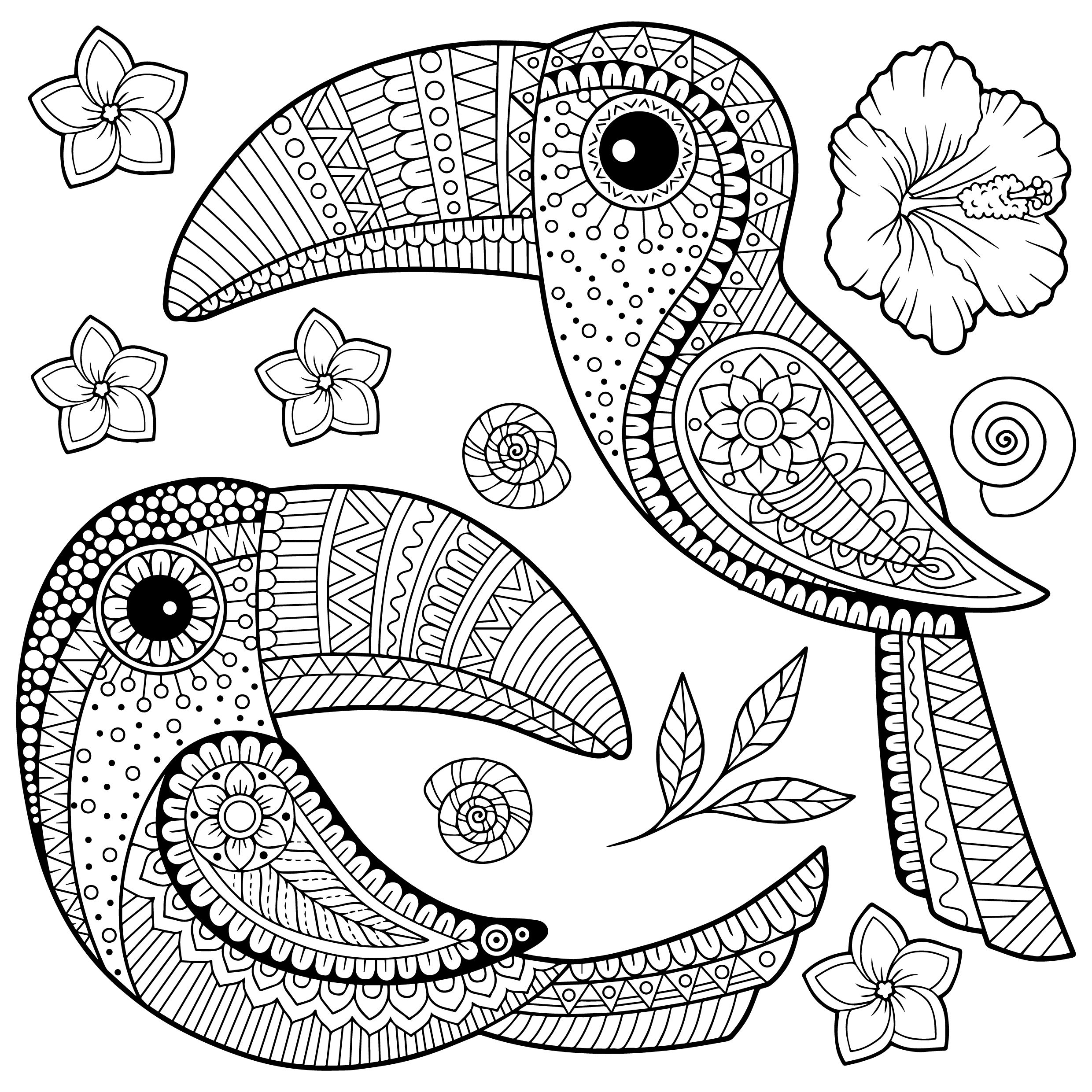 tropical bird coloring pages coloring for adults kleuren voor volwassenen colouring pages tropical coloring bird