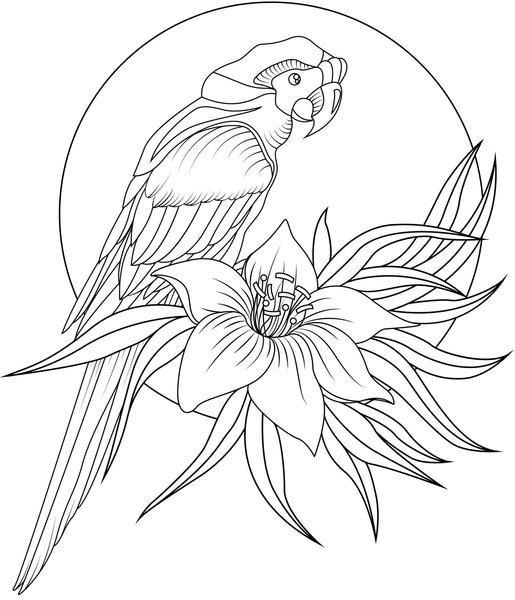 tropical bird coloring pages coloring macaws true parrots picture tropical bird coloring pages