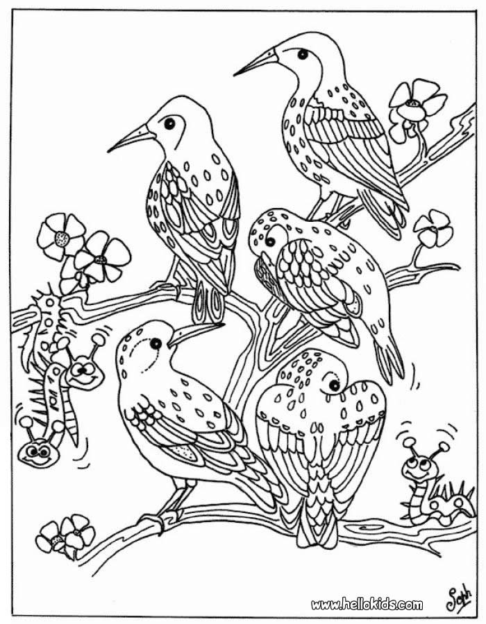 tropical bird coloring pages free coloring tropical bird free coloring daily bird pages tropical coloring