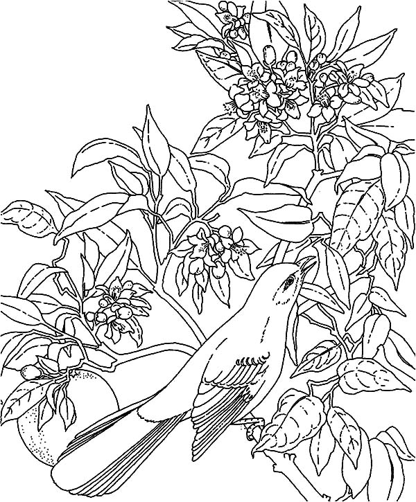 tropical bird coloring pages realistic tropical bird coloring coloring pages coloring pages bird tropical