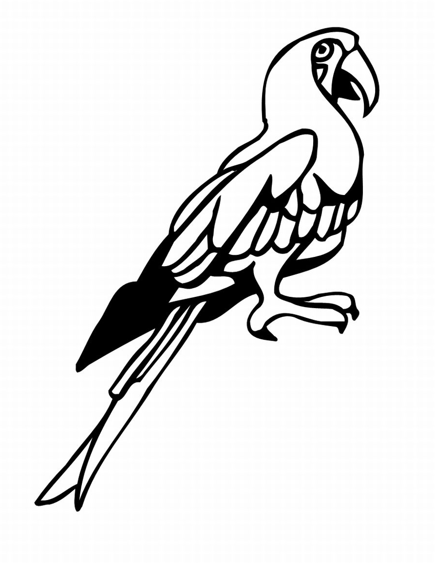tropical bird coloring pages realistic tropical bird coloring coloring pages coloring pages bird tropical 1 1
