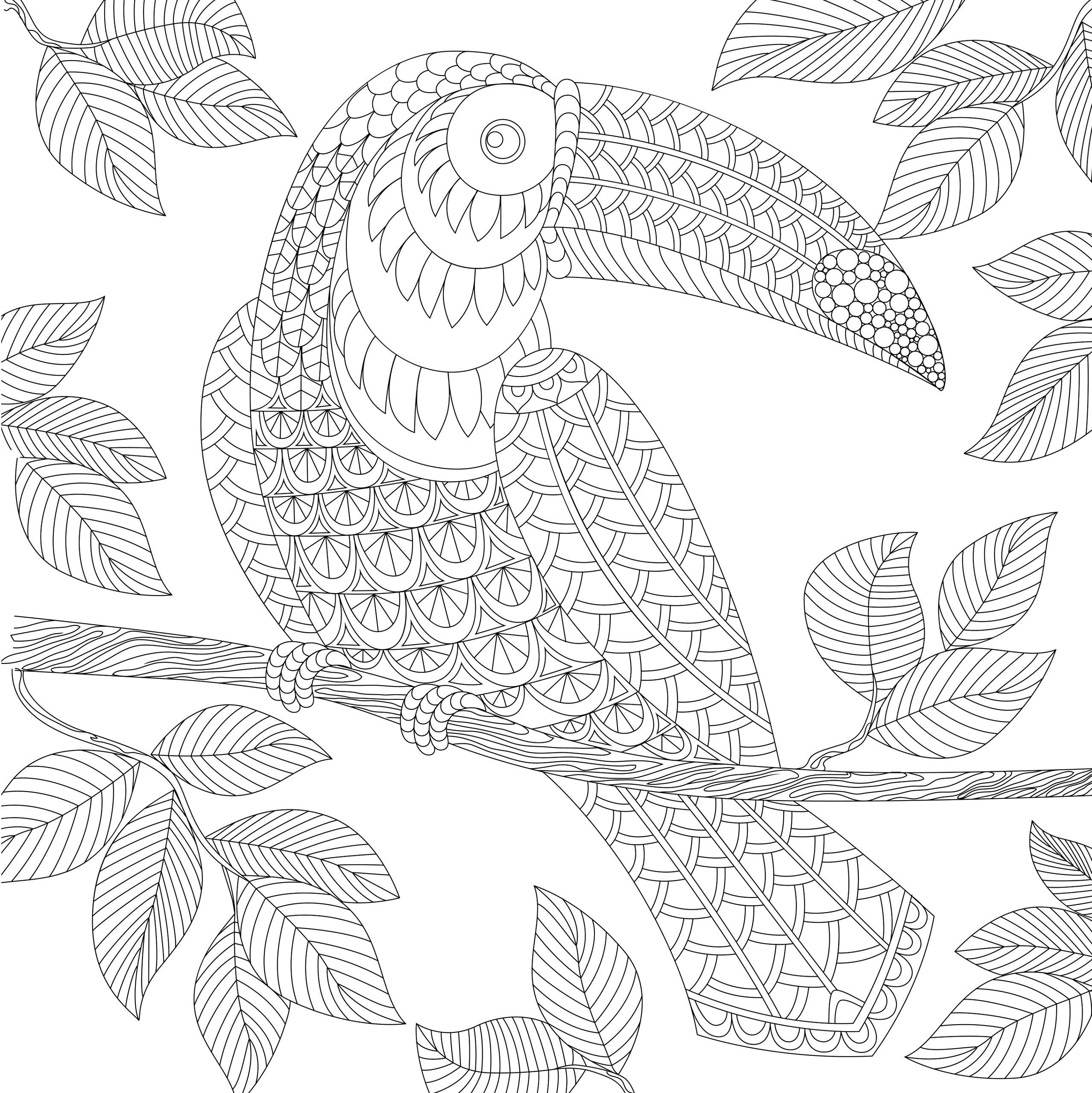 tropical bird coloring pages tropical bird animal coloring pages coloring bird pages tropical