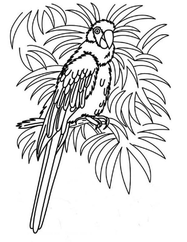 tropical bird coloring pages tropical bird coloring pages at getdrawings free download pages tropical bird coloring