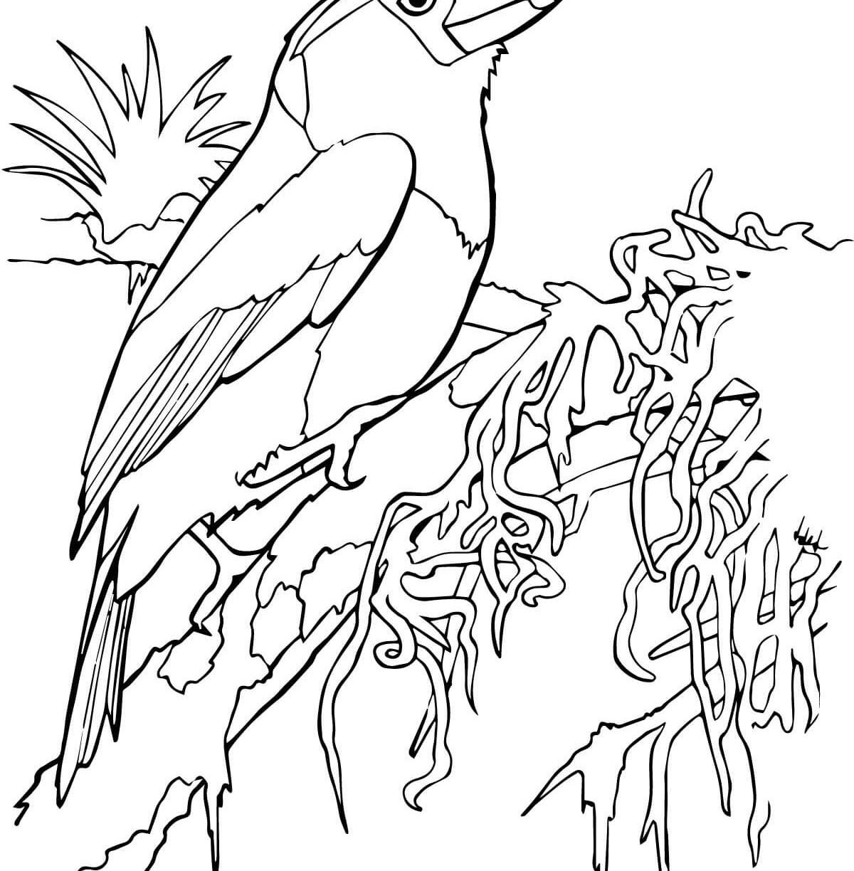 tropical bird coloring pages tropical bird drawing at getdrawings free download coloring tropical pages bird