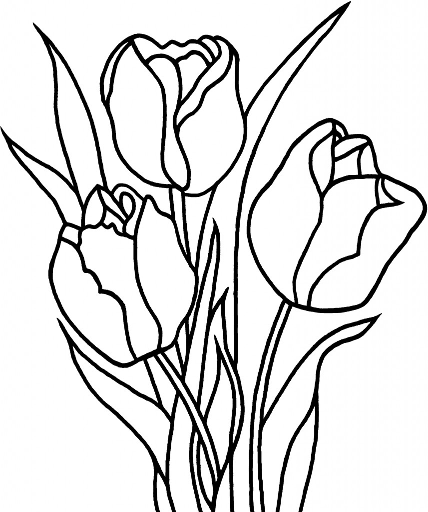 tulip colouring coloring pages for kids tulip coloring pages for kids colouring tulip