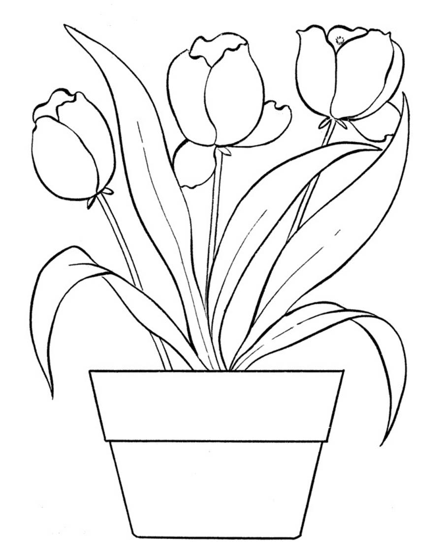 tulip colouring free printable tulip coloring pages for kids colouring tulip