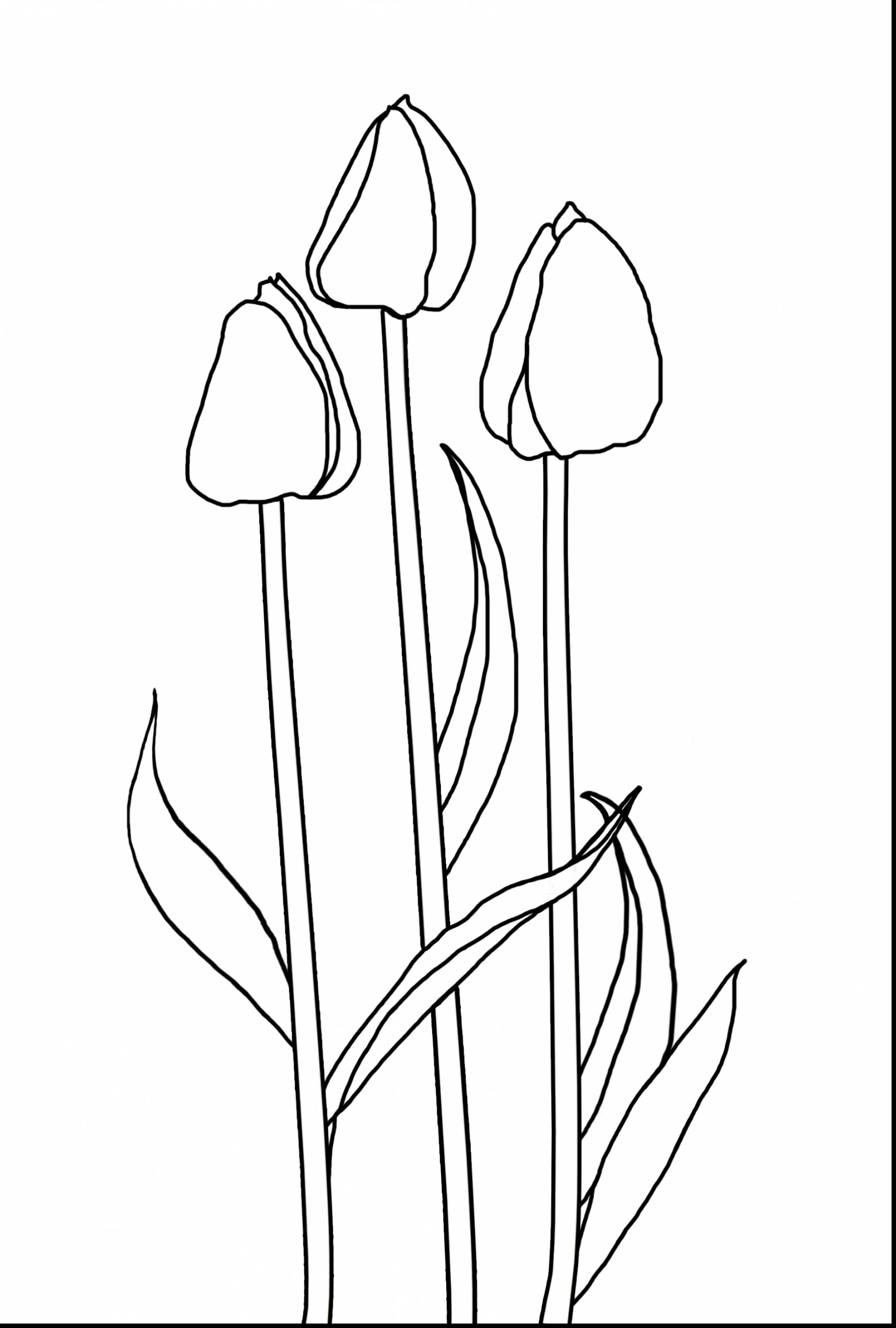 tulip colouring printable tulip coloring pages for kids cool2bkids colouring tulip