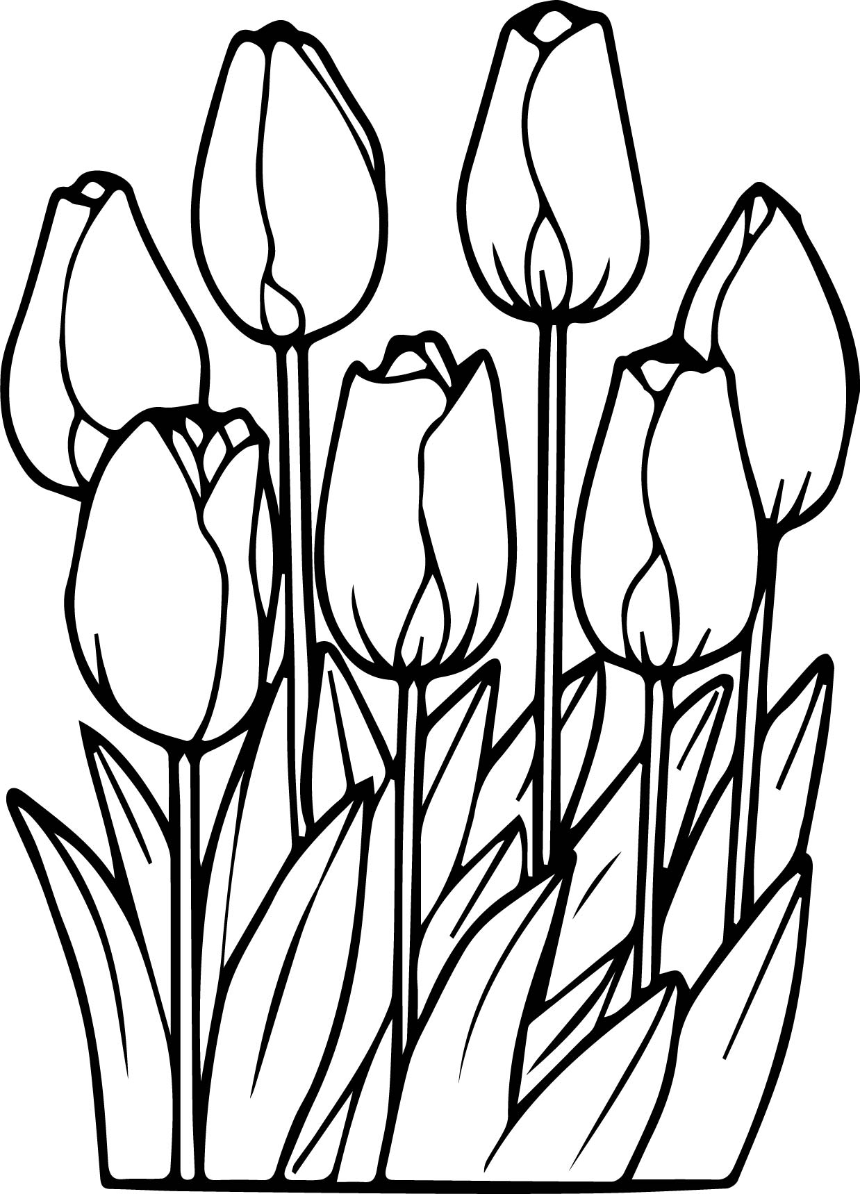 tulip colouring realistic tulip coloring sheet flower drawing drawings colouring tulip