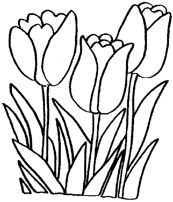 tulip colouring tulip coloring pages coloring pages to download and print tulip colouring