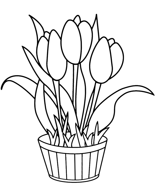 tulip colouring tulip coloring pages free printable coloring pages for kids colouring tulip