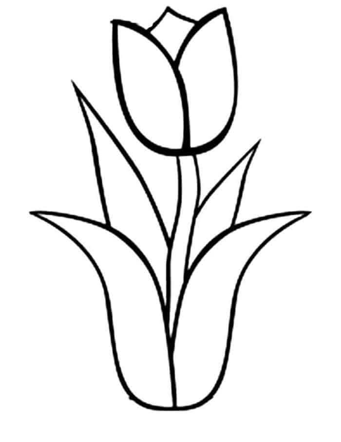 tulip colouring tulip coloring pages to download and print for free colouring tulip