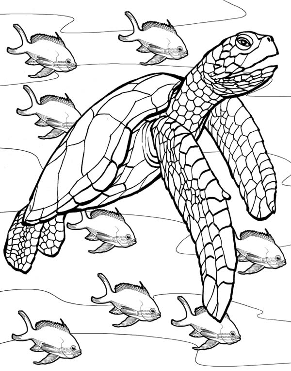 turtle coloring book page adult coloring pages turtle coloring home turtle coloring page book