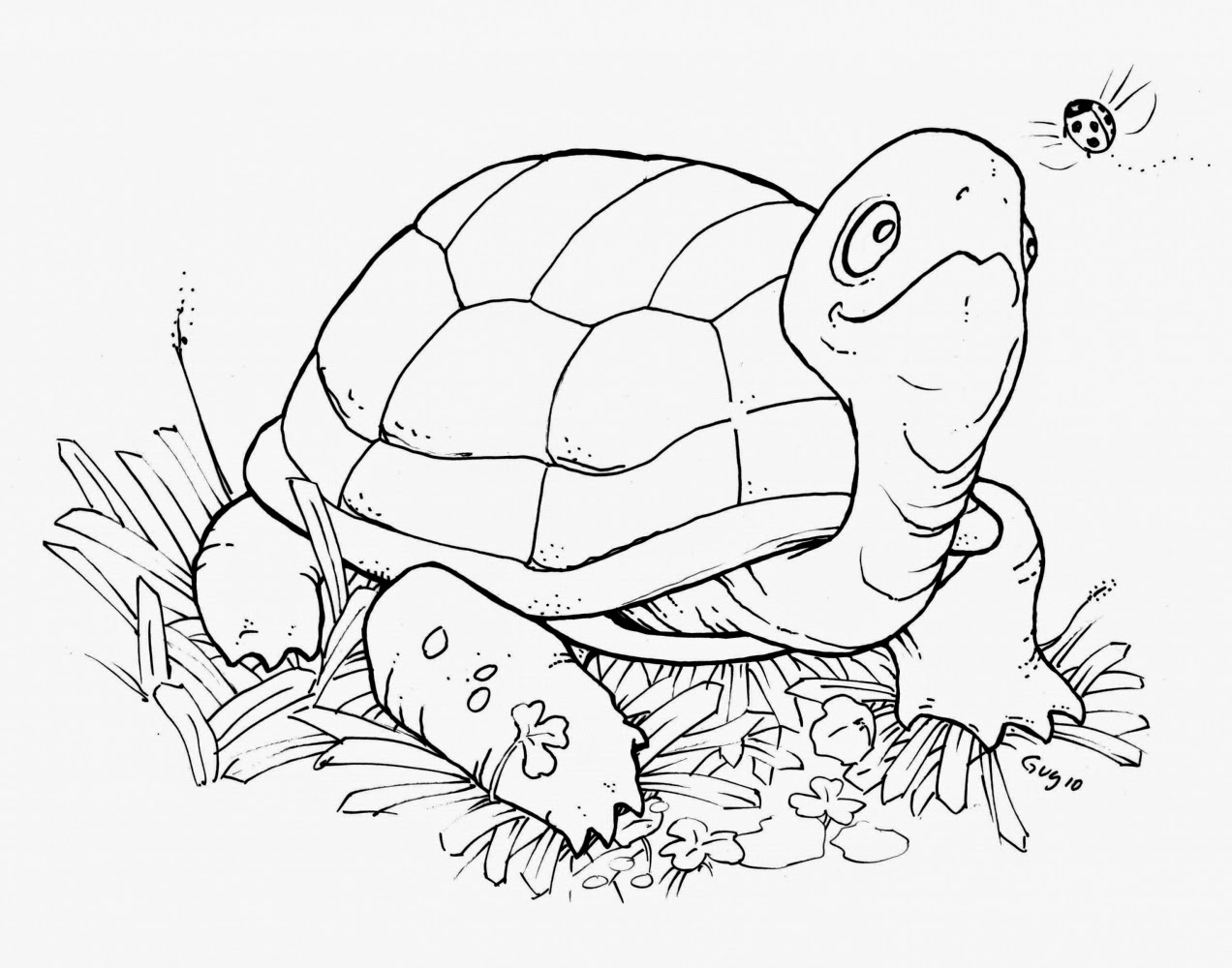 turtle coloring book page turtles coloring pages download and print turtles book coloring page turtle