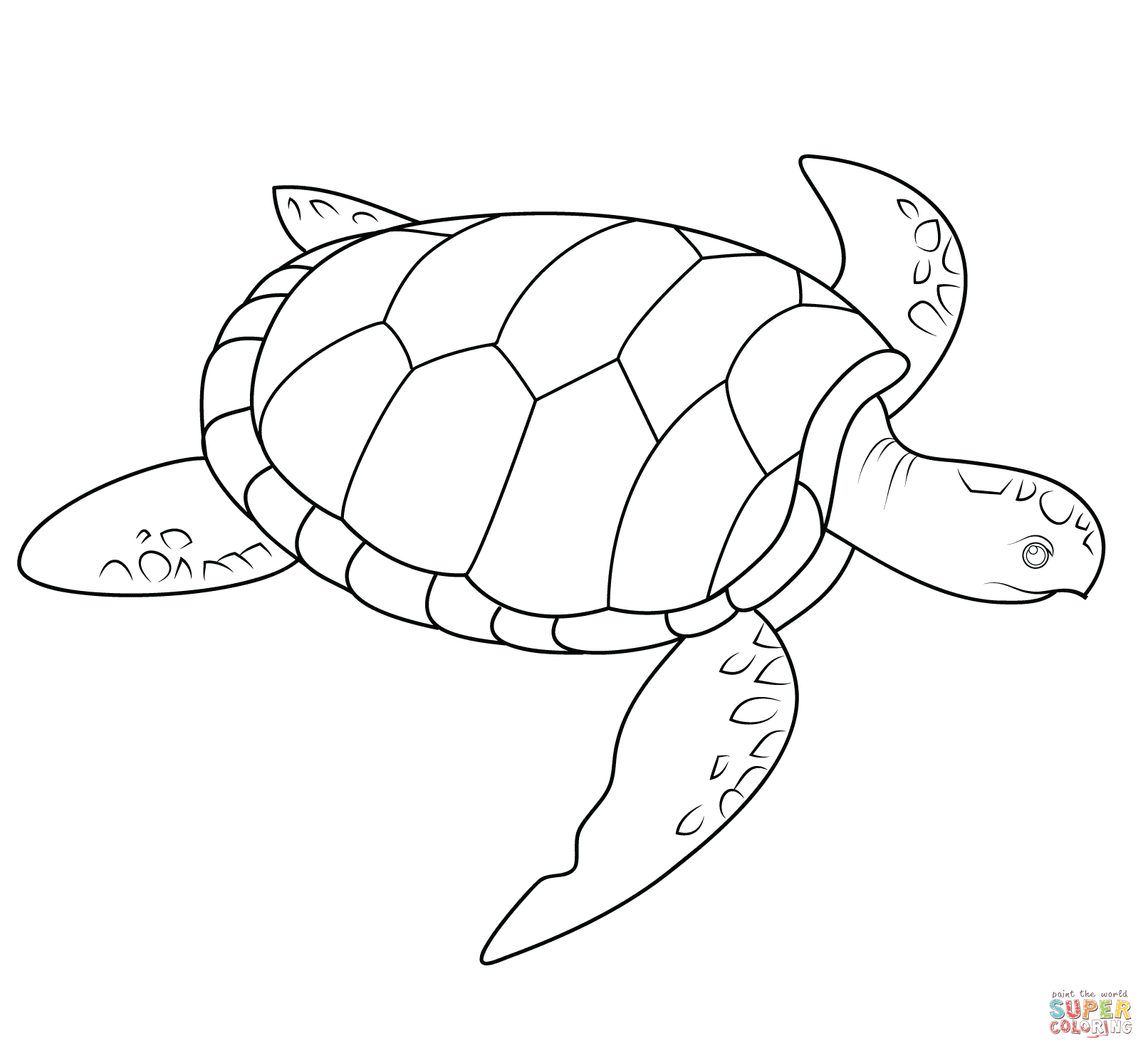 turtle pictures to color coloring pages turtles free printable coloring pages to pictures color turtle