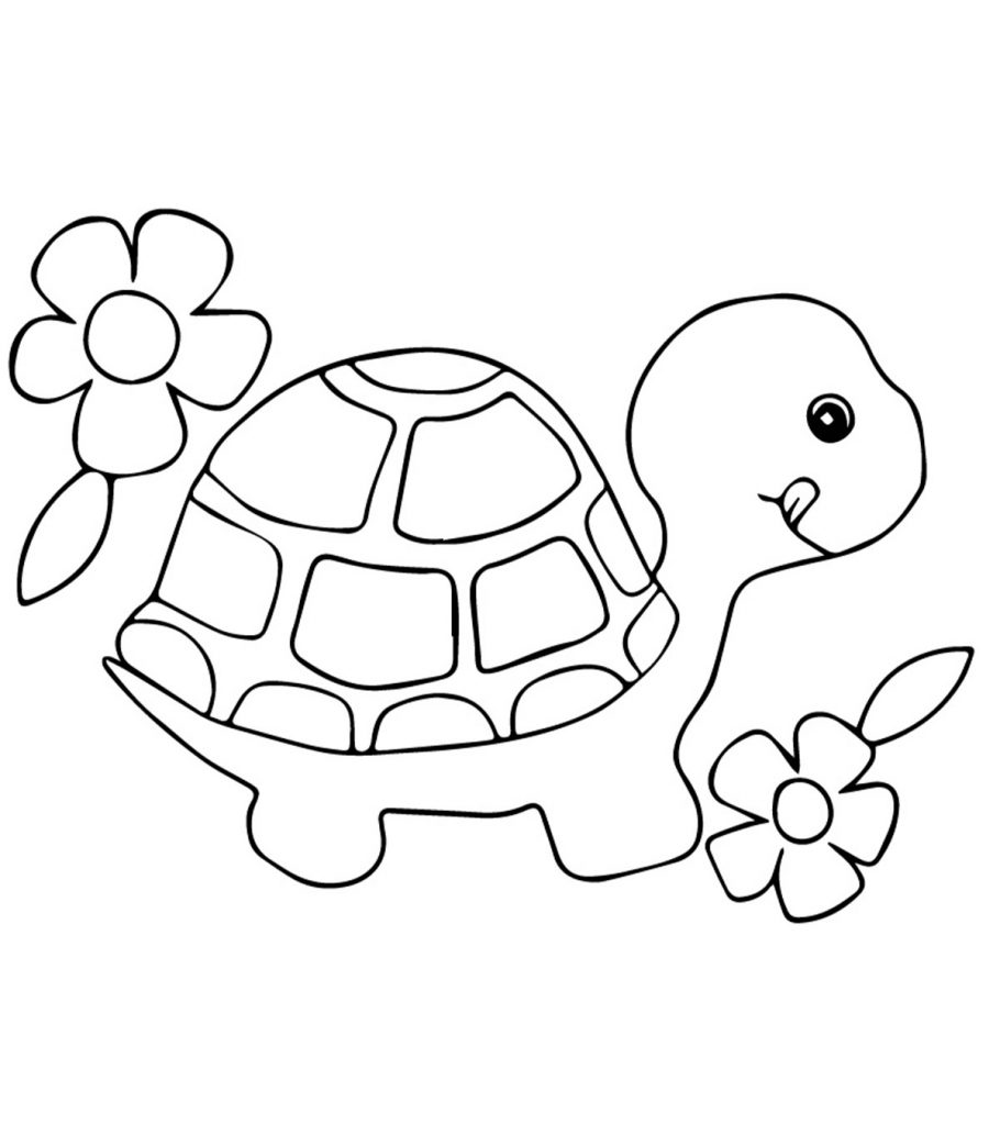 turtle pictures to color cool tortoise turtle look coloring page turtle coloring color to turtle pictures