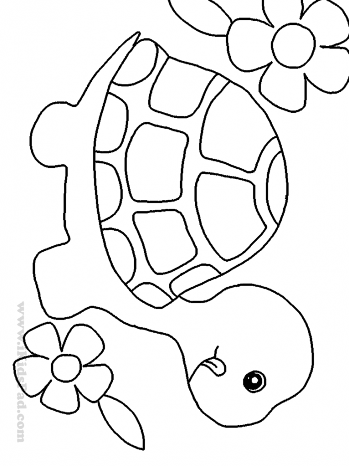 turtle pictures to color free printable turtle coloring pages for kids turtle to color pictures