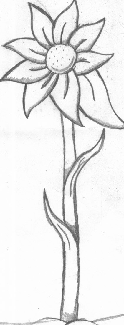 uncolored pictures of flowers cactus flower uncolored by karakins21 pictures of flowers uncolored