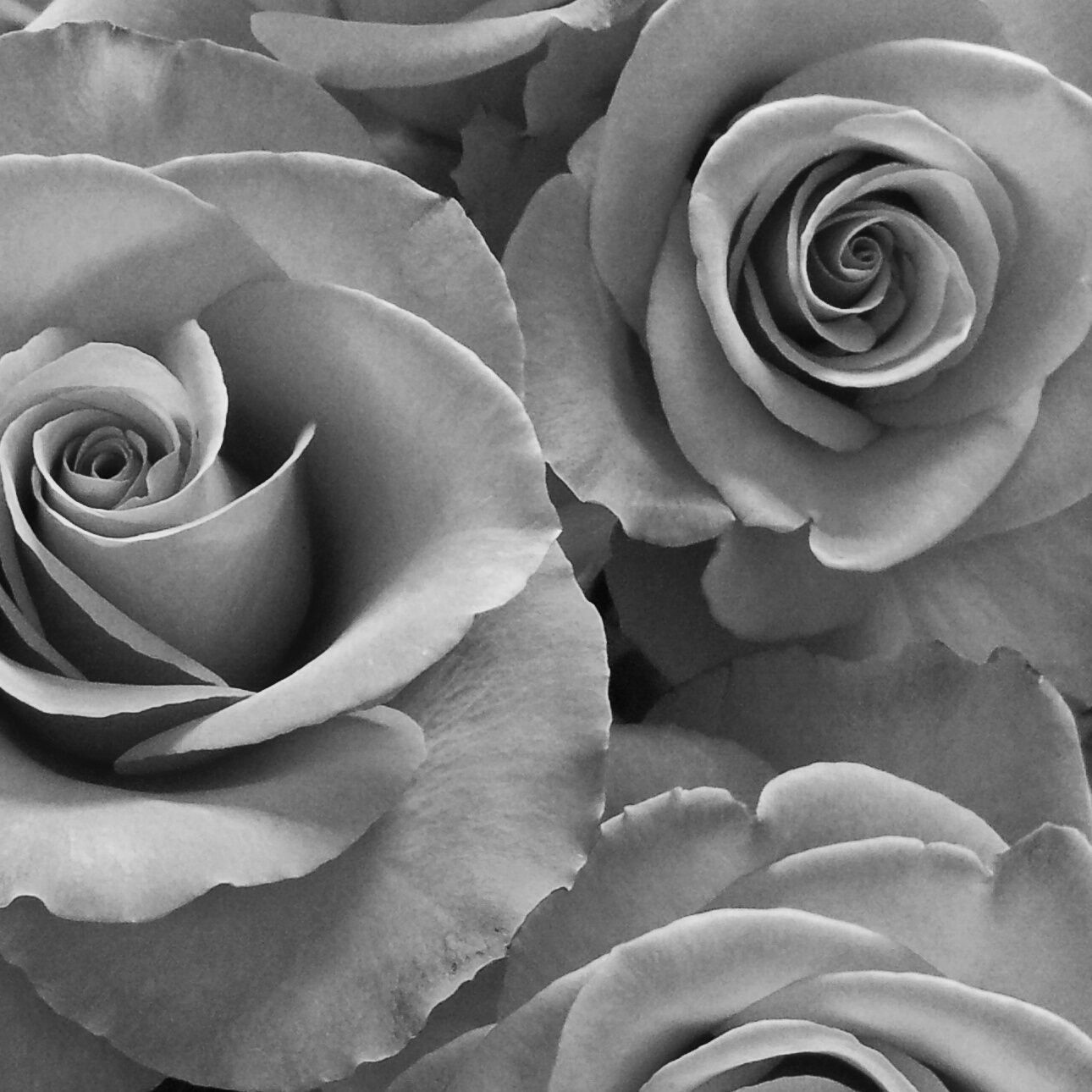 Uncolored pictures of flowers