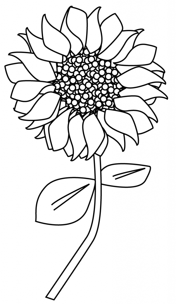 uncolored pictures of flowers hand drawn flowers royalty free stock photography image flowers of pictures uncolored