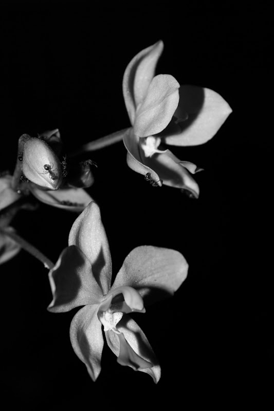 uncolored pictures of flowers seven moments to remember from pictures of uncolored uncolored flowers of pictures