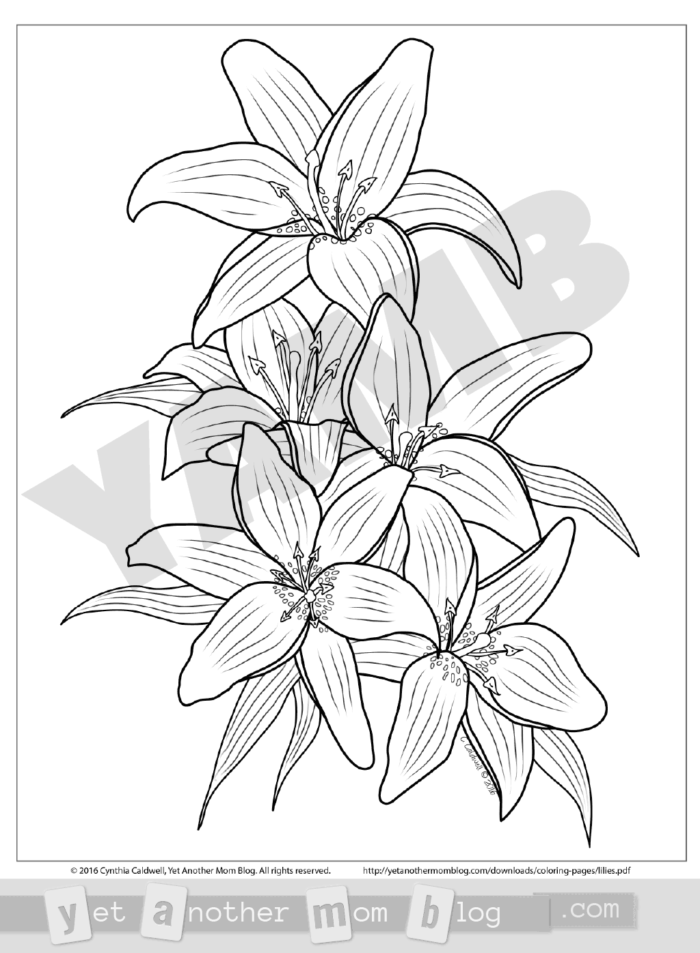 uncolored pictures of flowers still life with flowers stock vector illustration of pictures uncolored flowers of