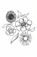 uncolored pictures of flowers sunflower drawing tutorial at getdrawings free download flowers of uncolored pictures