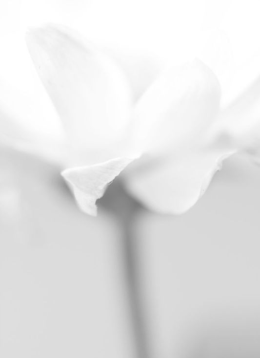 uncolored pictures of flowers uncolored flowers in a basket and ribbon for text adult uncolored of flowers pictures