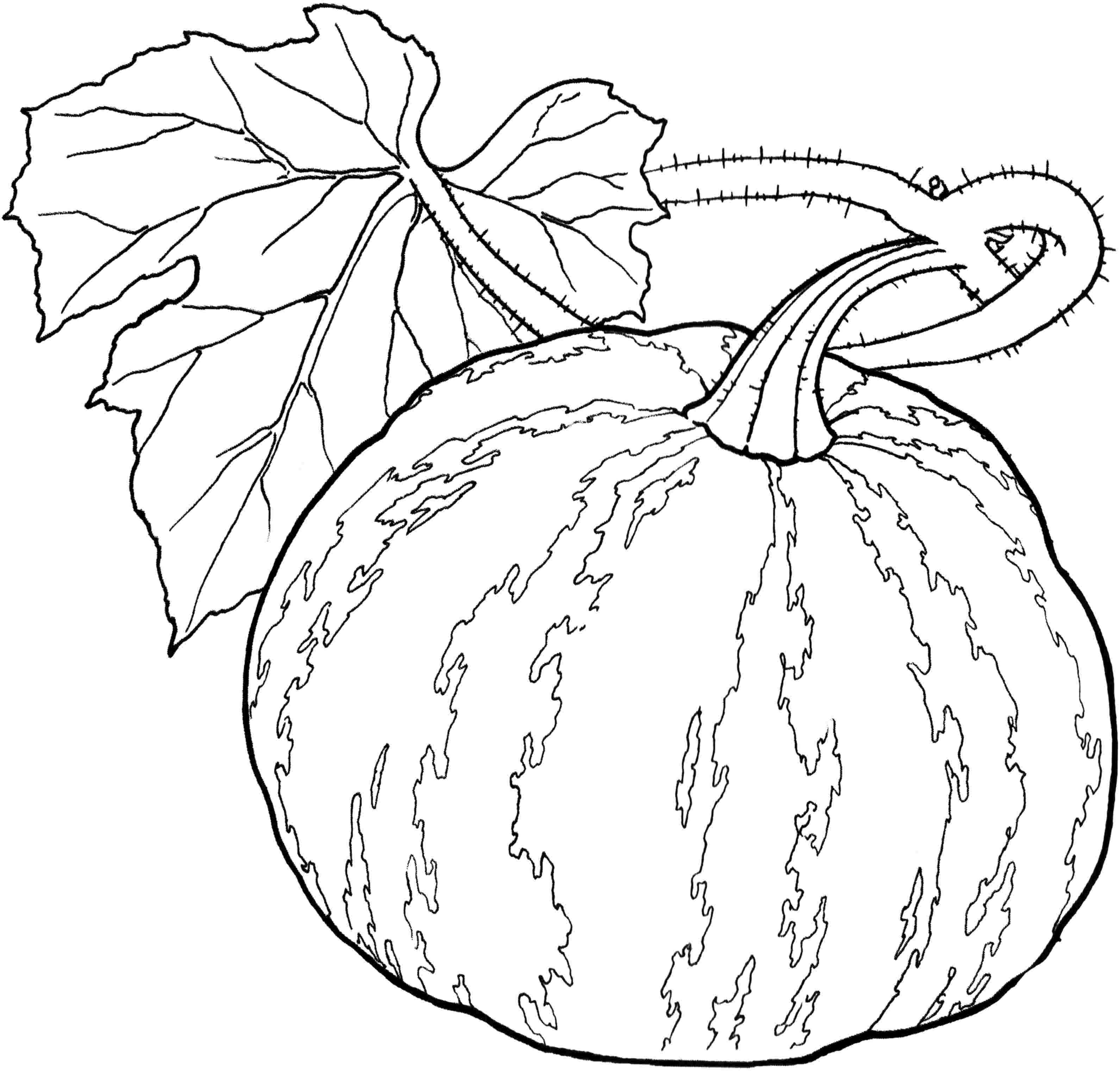 vegetable pictures to color free vegetables coloring pages for adults printable to color to vegetable pictures