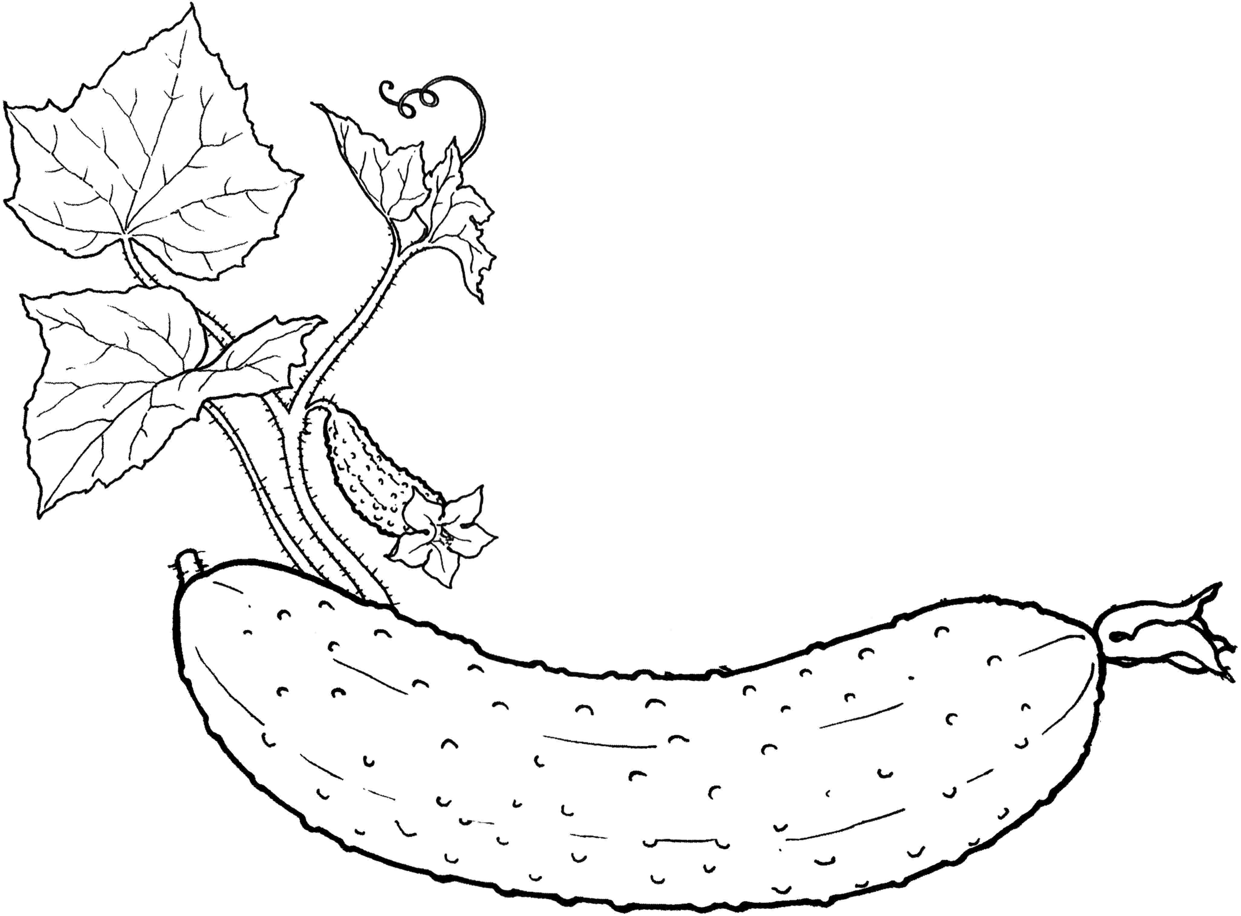 vegetable pictures to color vegetabless coloring pages coloring home vegetable pictures to color