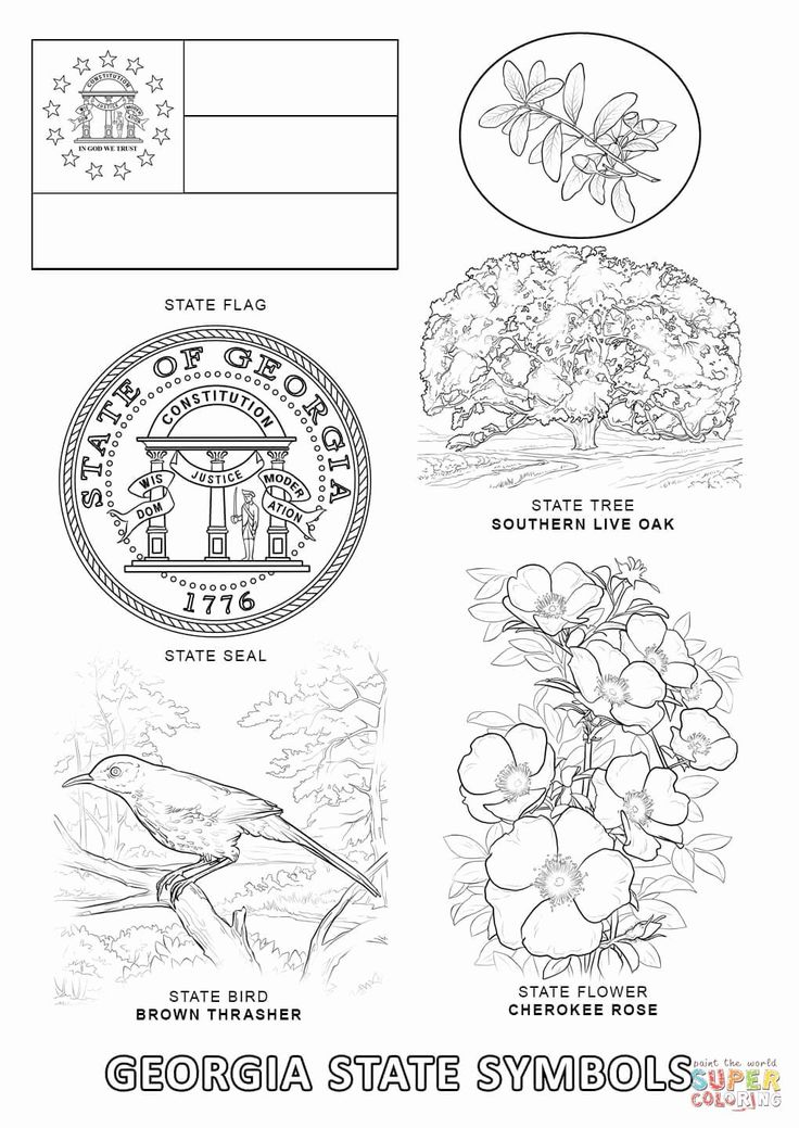 virginia state symbols coloring pages united states state symbols printables with images pages virginia symbols state coloring