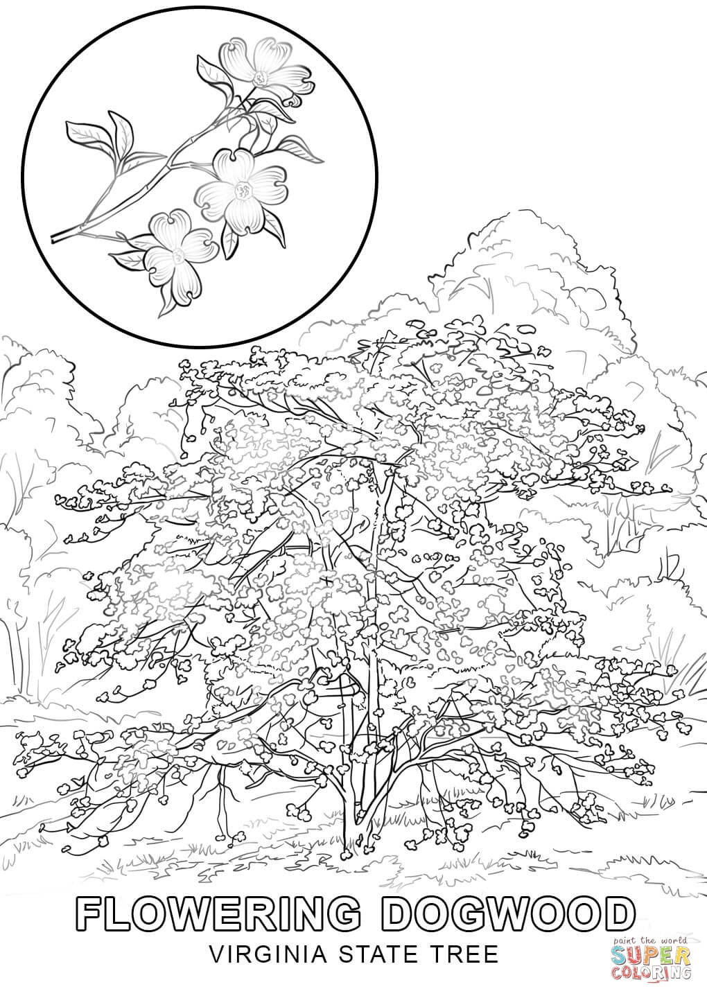 virginia state symbols coloring pages usa and state flag coloring printouts enchantedlearningcom pages symbols coloring state virginia