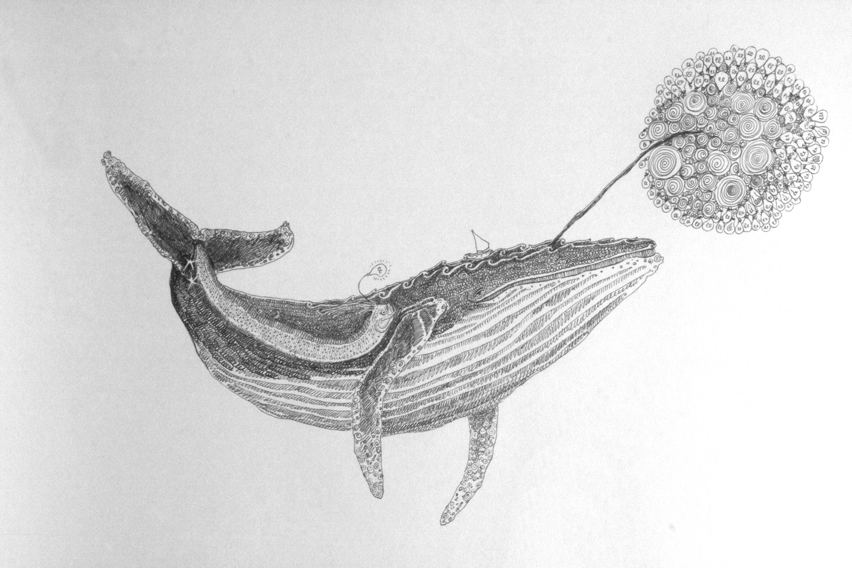 whale drawing first whale in months by killerorcawhale on deviantart whale drawing