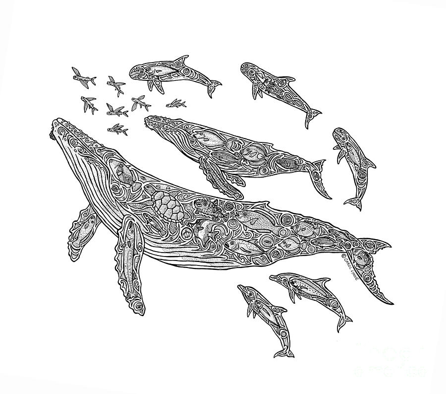 whale drawing hawaiian humpbacks drawing by carol lynne drawing whale