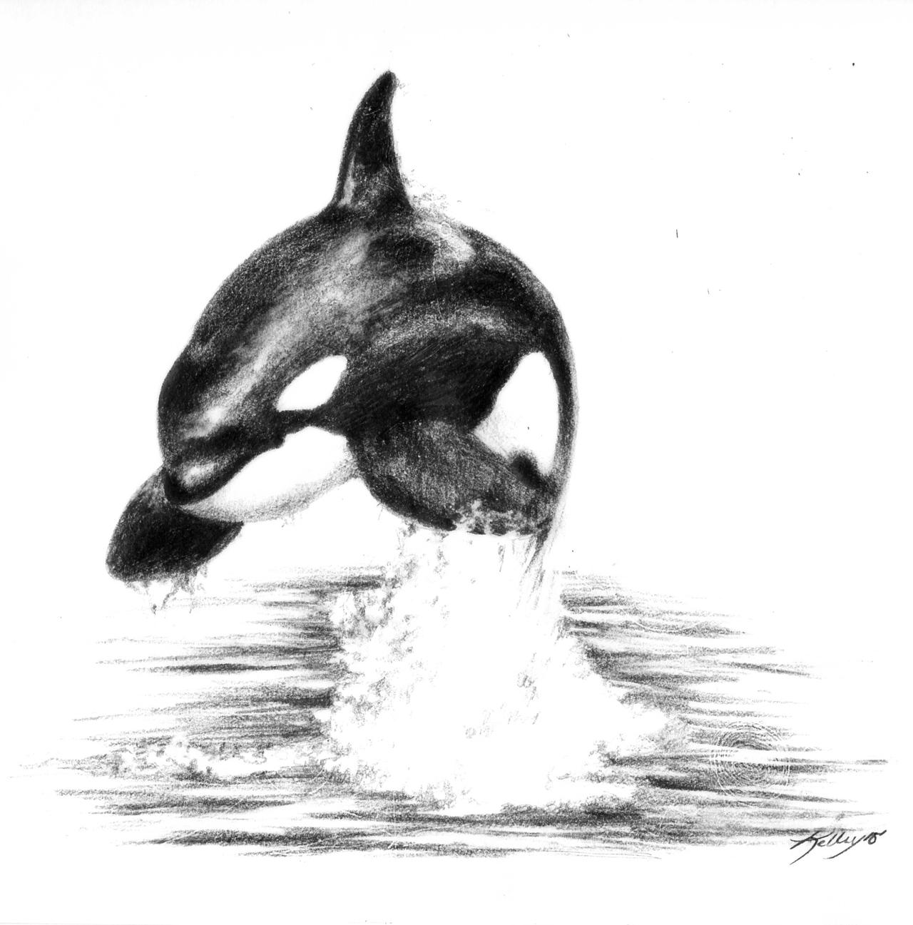 whale drawing how to draw a killer whale realistic whale drawing