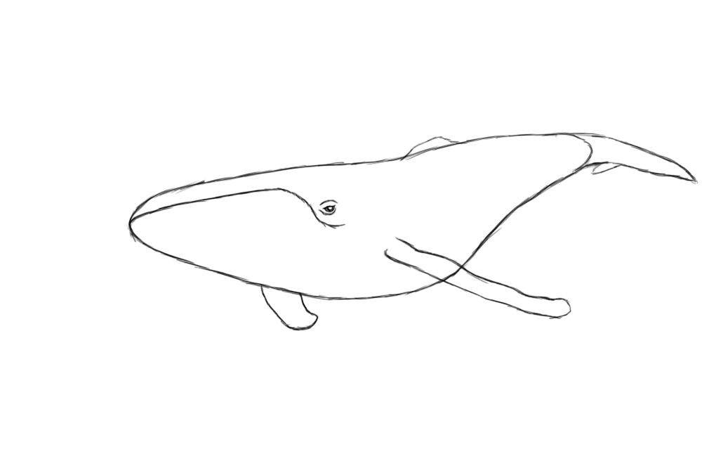 whale drawing how to draw a whale draw central drawing whale 1 1