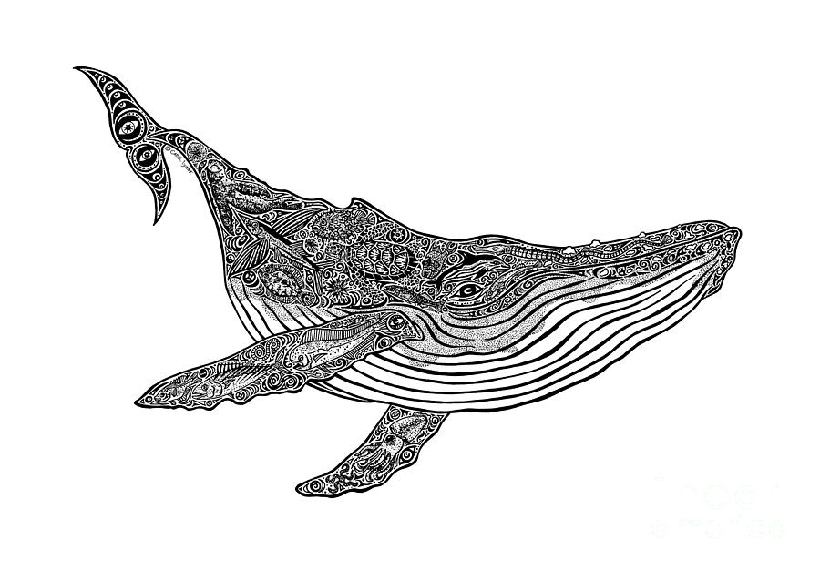 whale drawing humpback whale drawing at paintingvalleycom explore whale drawing 1 1