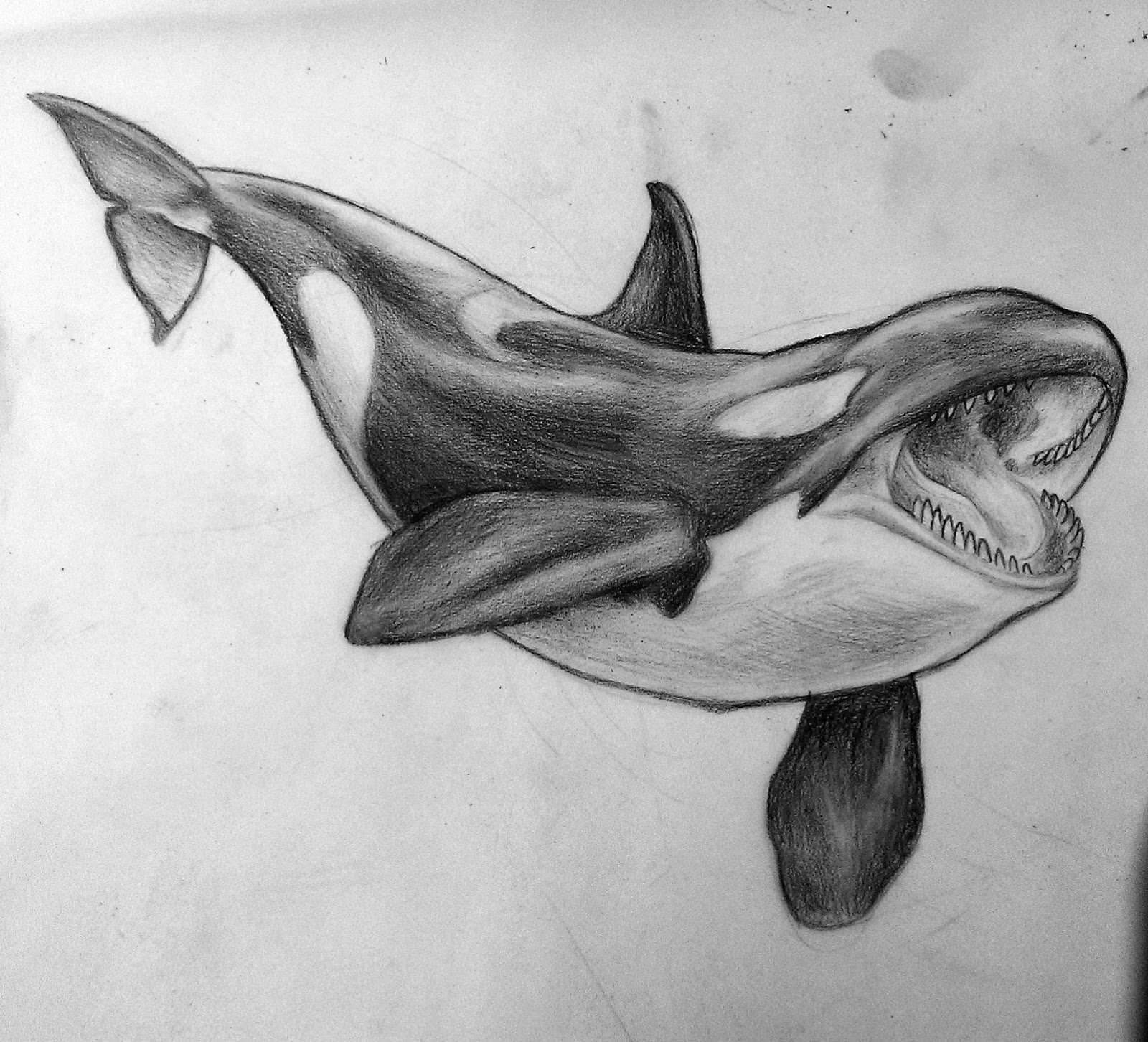 whale drawing humpback whale pencil drawing by gallerydeceylon on deviantart drawing whale