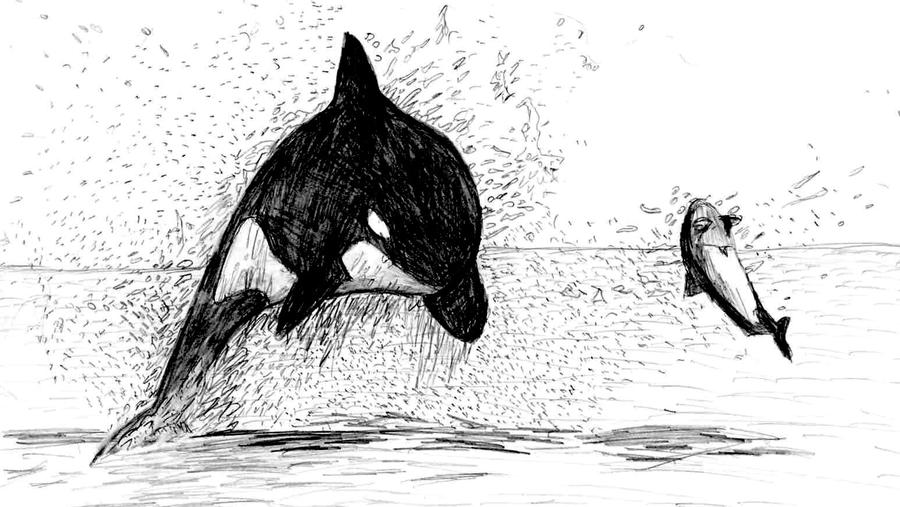 whale drawing killer whale dive by drawnron on deviantart drawing whale
