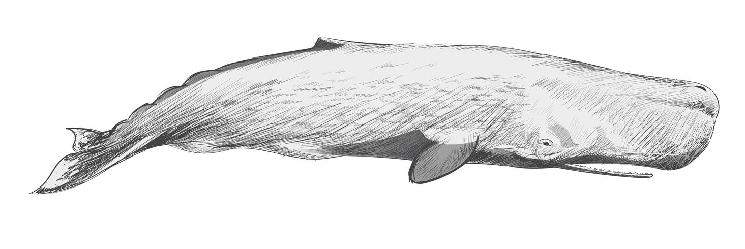 whale drawing whale pen drawing printable digital download file etsy drawing whale