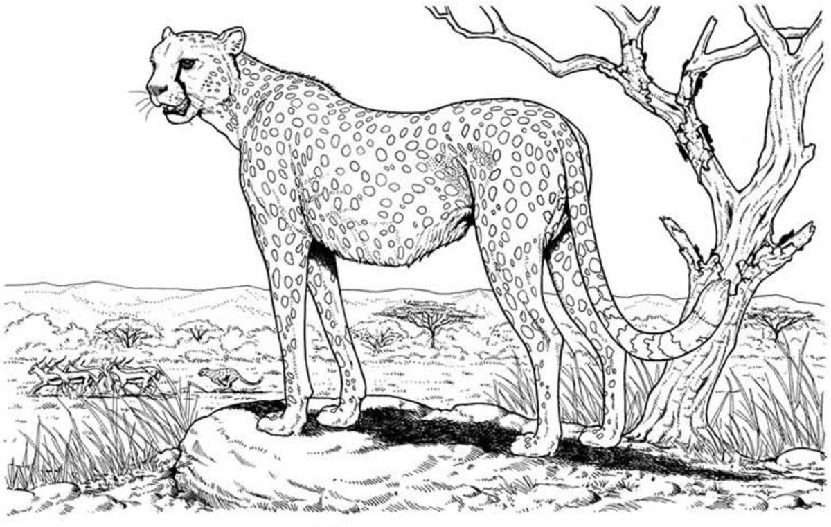 wild animal for coloring free fox coloring pages coloring for wild animal