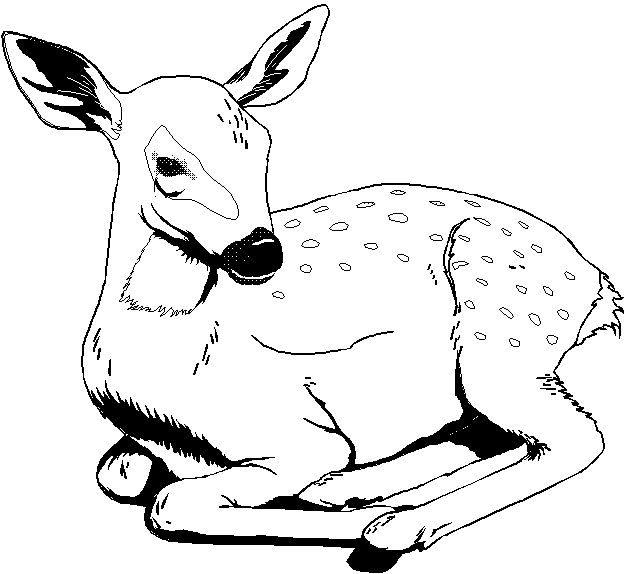 wild animal for coloring free leopard coloring pages wild for animal coloring