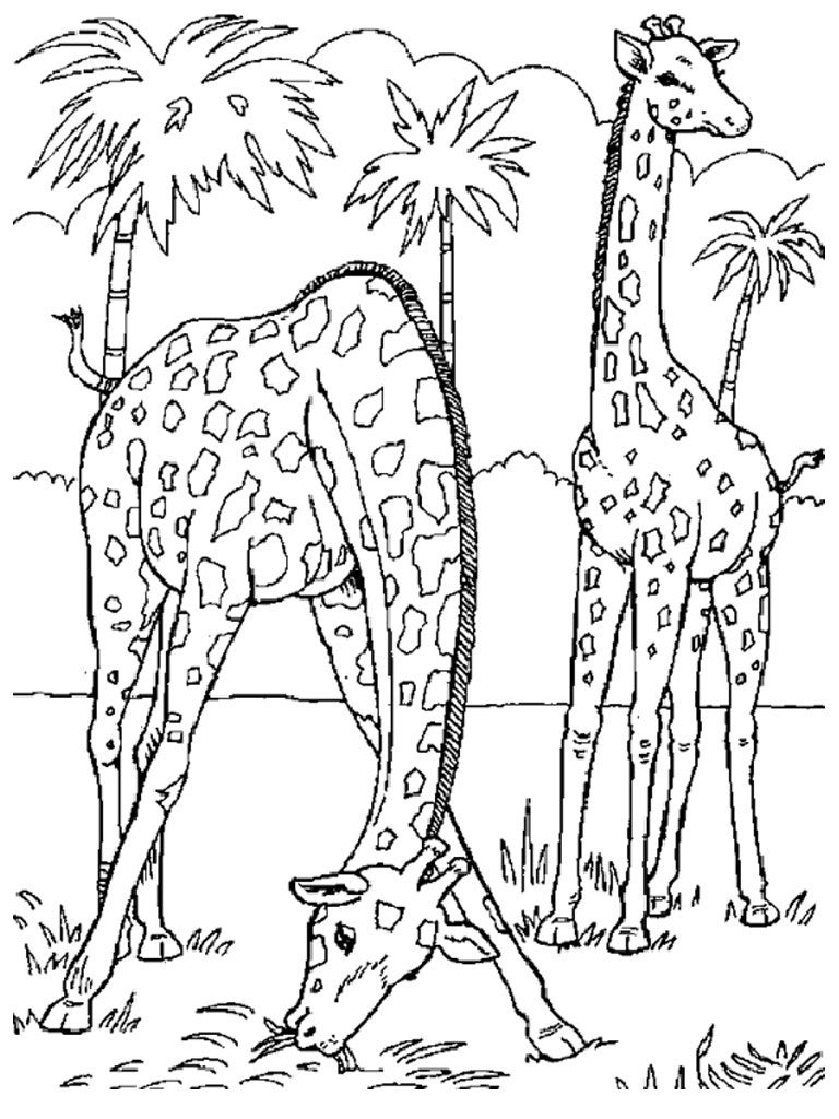 wild animal for coloring wild animal coloring pages best coloring pages for kids coloring animal wild for