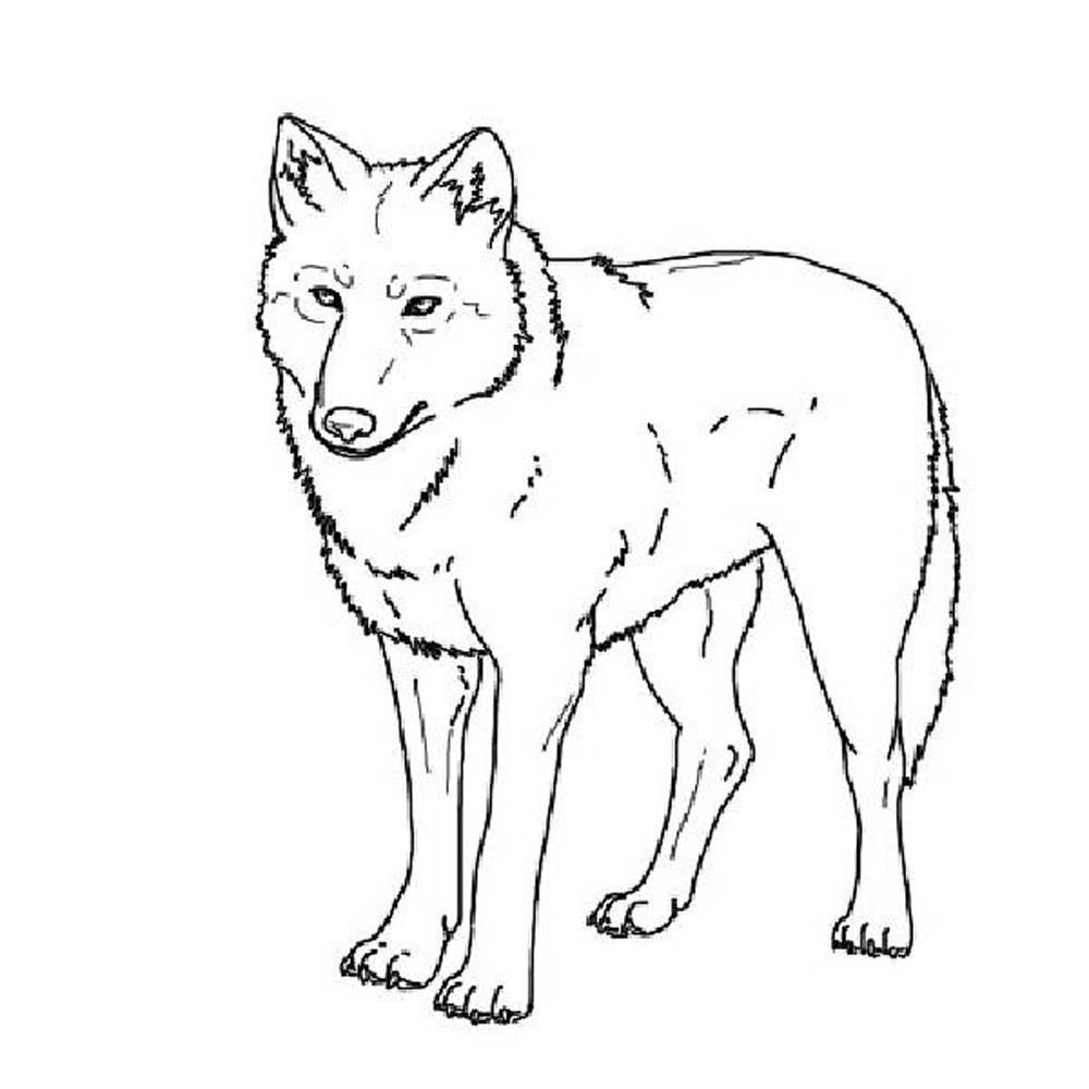 wolf pictures to colour print download wolf coloring pages theme wolf colour to pictures