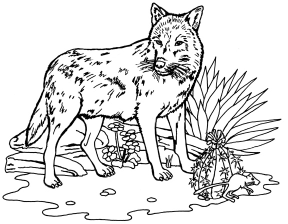 wolf pictures to colour wild animal quot wolf quot printable coloring pages to wolf pictures colour